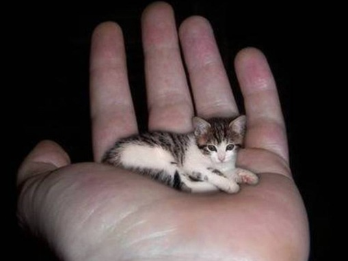 The-smallest-cat-in-the-world.jpg Biggest Real Dog In The World