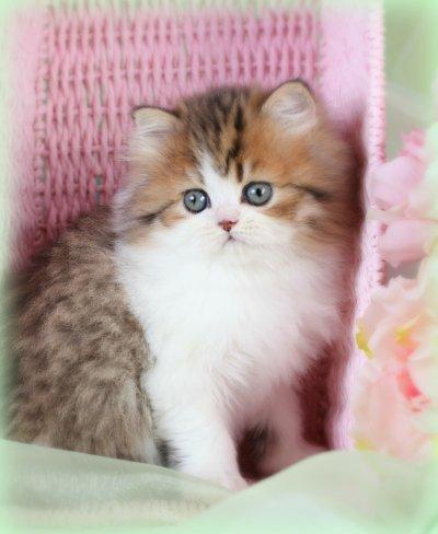 cat 4 hurricane
