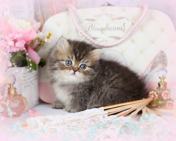 Shaded Golden Teacup Persian Rug Hugger