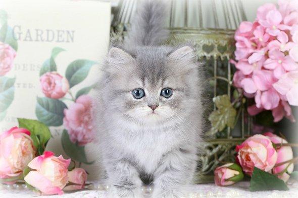 frolic cat pounce