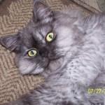 Doll Face Persian Kittens Reviews – Linda T.
