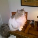 Doll Face Persian Kittens Reviews – Holli