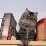 Doll Face Persian Kittens Reviews – The Morris Family