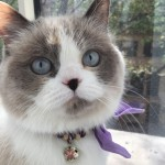 Doll Face Persian Kittens Reviews – The Zilkha Family