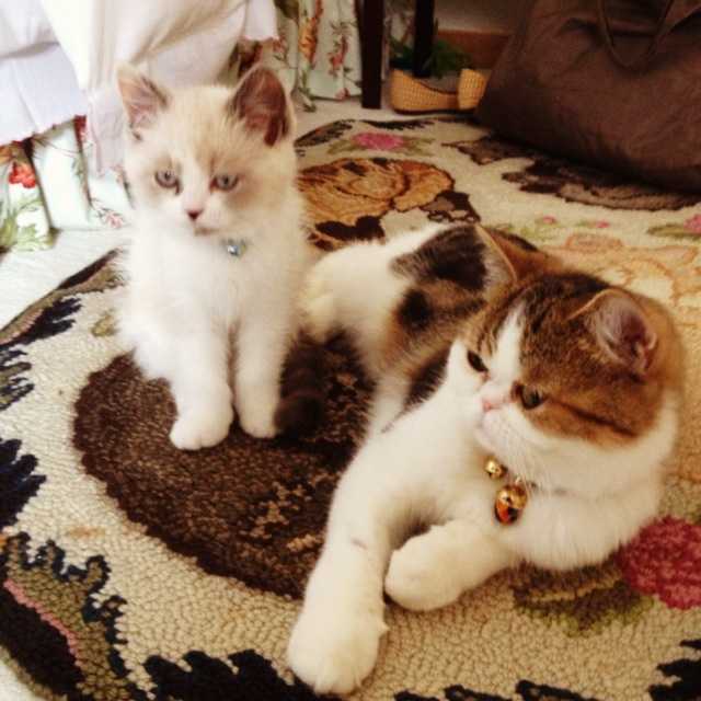 Edmund & Clarissa