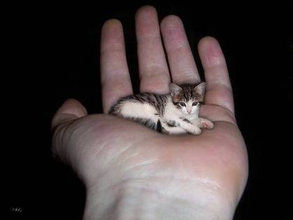 contemporary biggest cat in the world guinness to inspiration - Smallest Cat In The World Guinness 2014