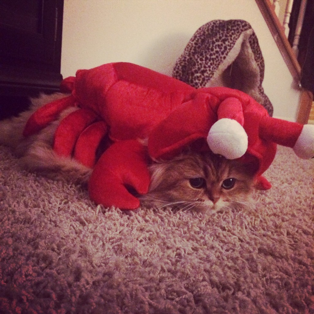 gigi lobster
