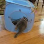 Doll Face Persian Kittens Reviews – Karen H.
