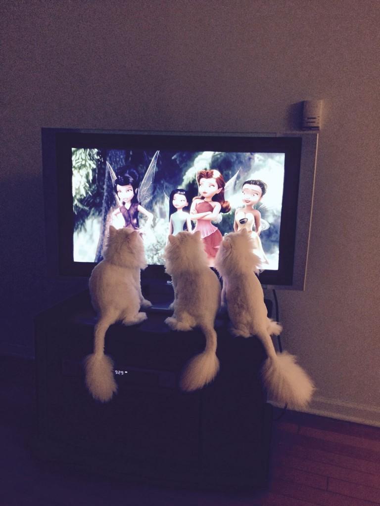 Doll Face Persian Kittens Reviews - Kovacic Family