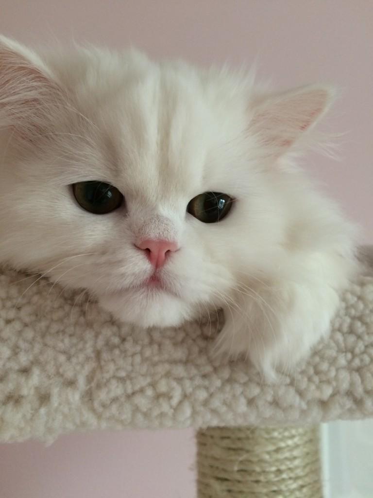 troy arctic cat