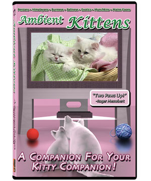 Many of our beautiful Persian kittens were featured in this DVD!
