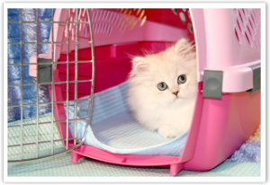 Our kittens have been featured in Dry Fur Travel products advertisements!