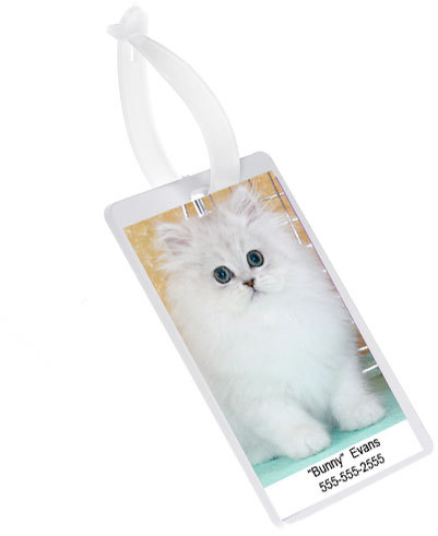 Kitten model for Dry Fur Kennel Tags.
