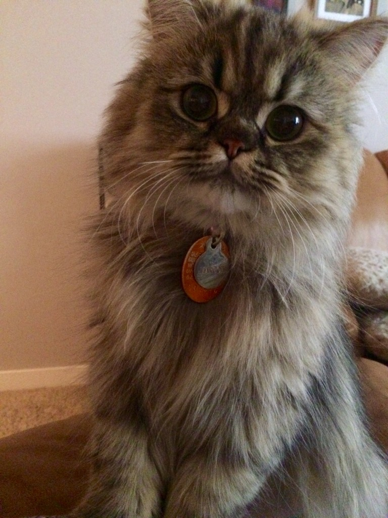 Doll Face Persian Kittens Customer Reviews