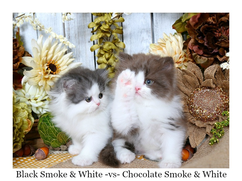 black smoke vs chocolate smoke