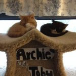Doll Face Persian Kittens Reviews – Vicki