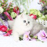 Romance – Click Here