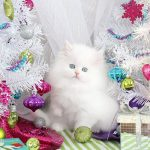 Snowbell – Click Here