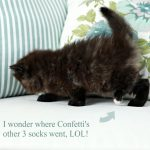 Confetti – Currently Available