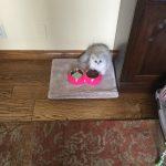Doll Face Persian Kittens Testimonials – Carol