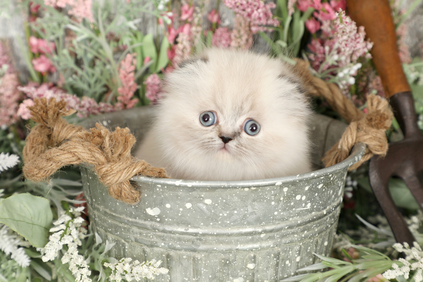 Rug Hugger Fold Kitten