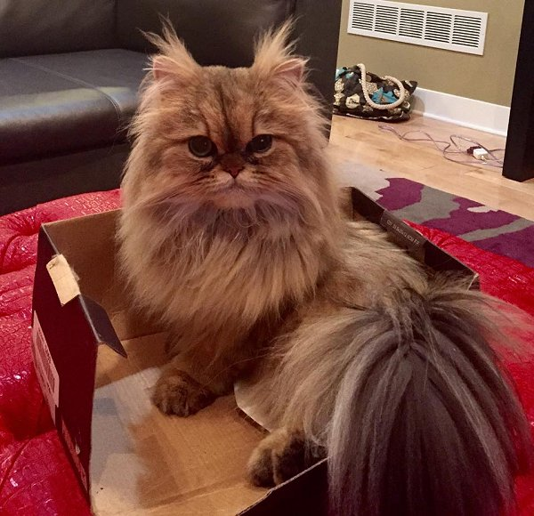 Doll Face Persian Kittens Reviews