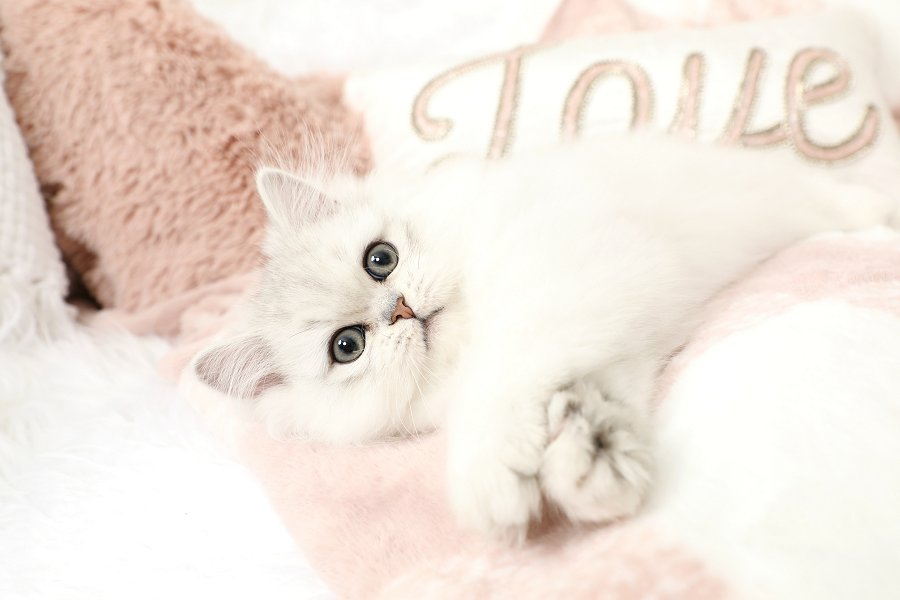 This the picture to find out more information about this kitten