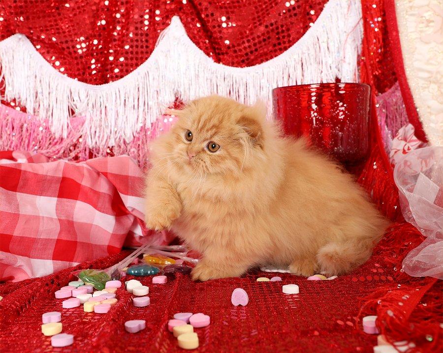 Red Rug Hugger Kitten