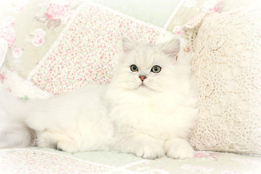 Fancy Feast Cat