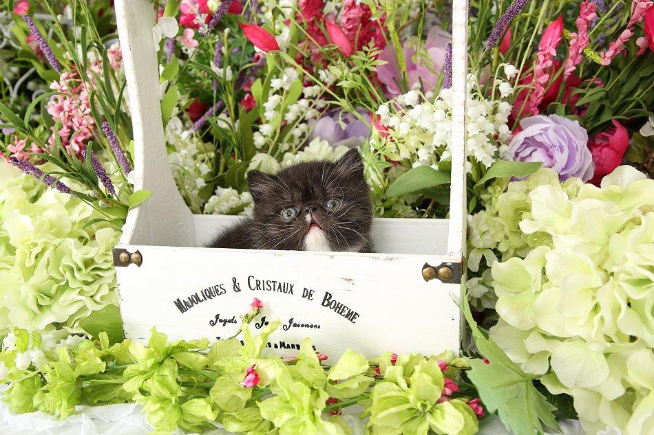 Black and white Rug Hugger Kitten