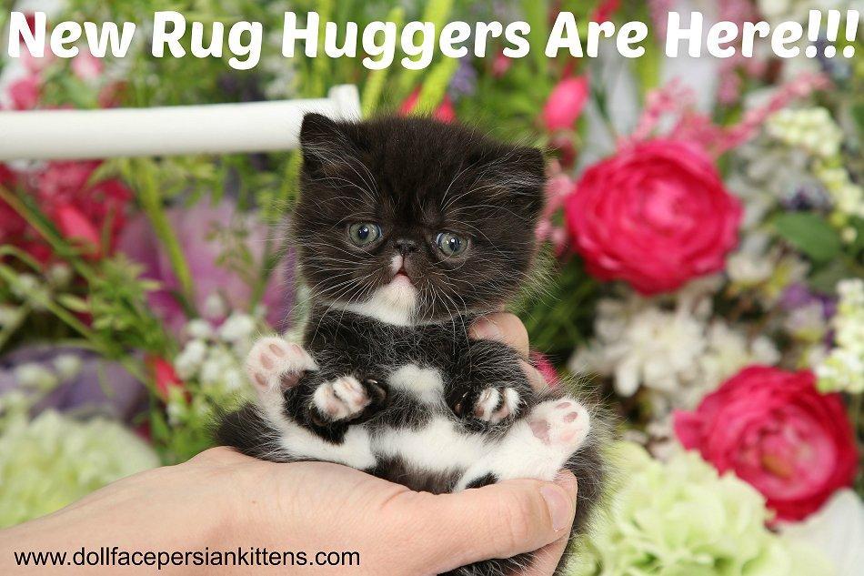 Rug Hugger Kittens