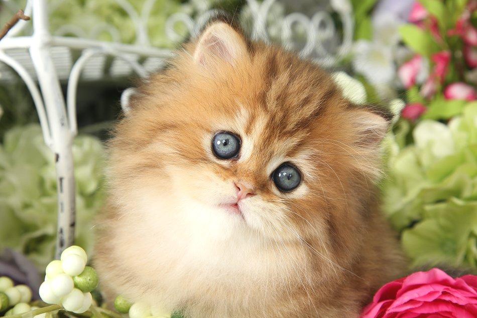 Goldie Hawn Kitten