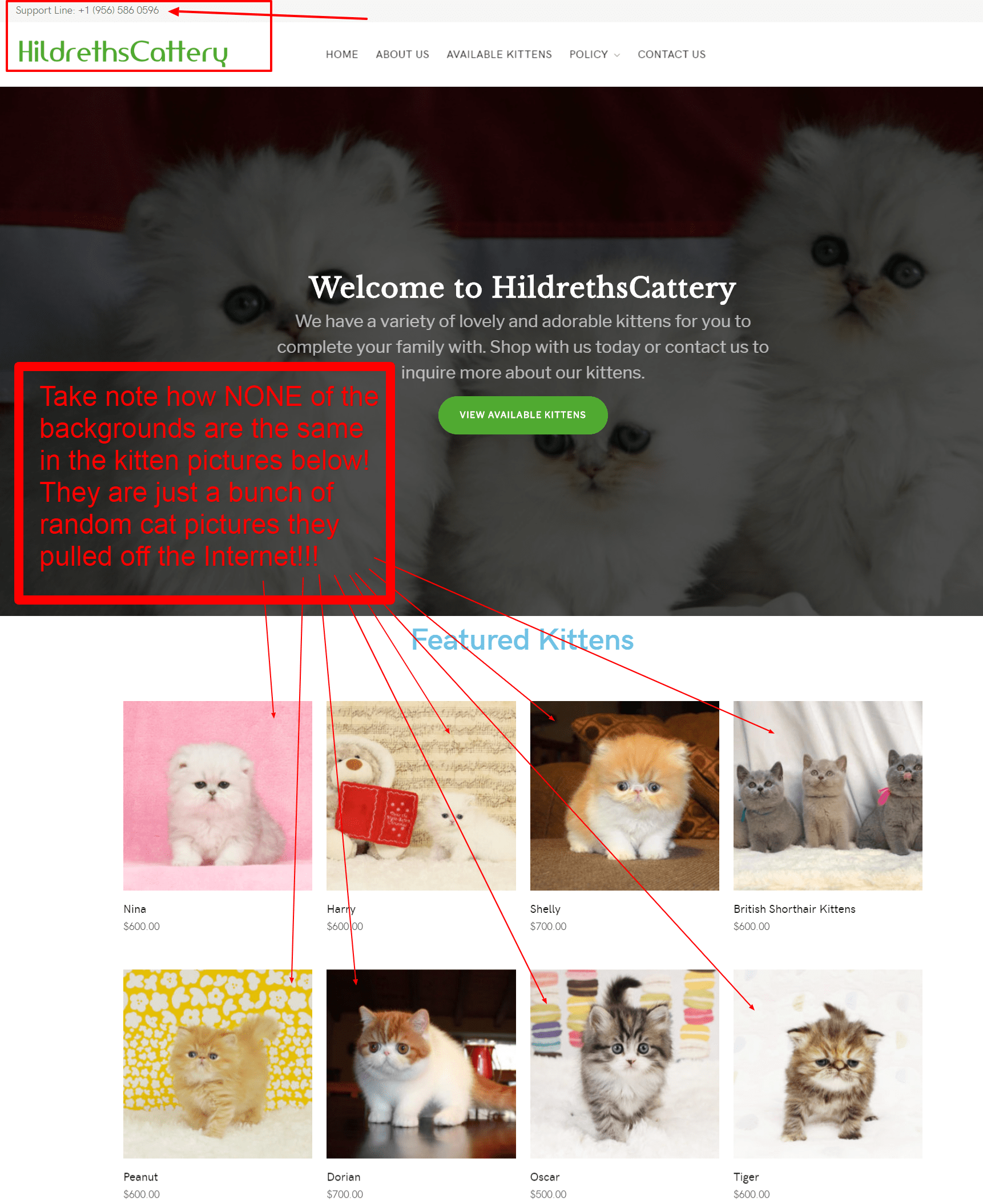 Hildreths Cattery Is a Scam Site