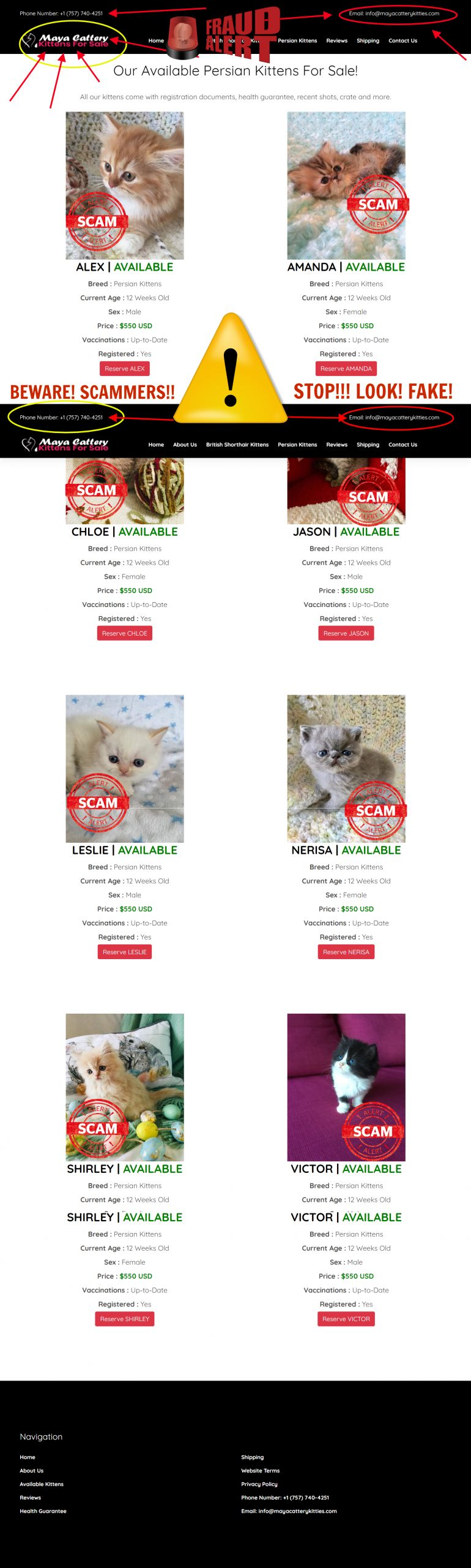 Maya Cattery Kitties is a Scam Site