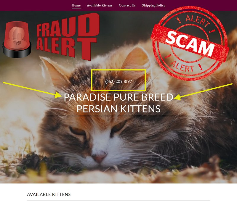 Paradise Persian Kittens is a Scam Site