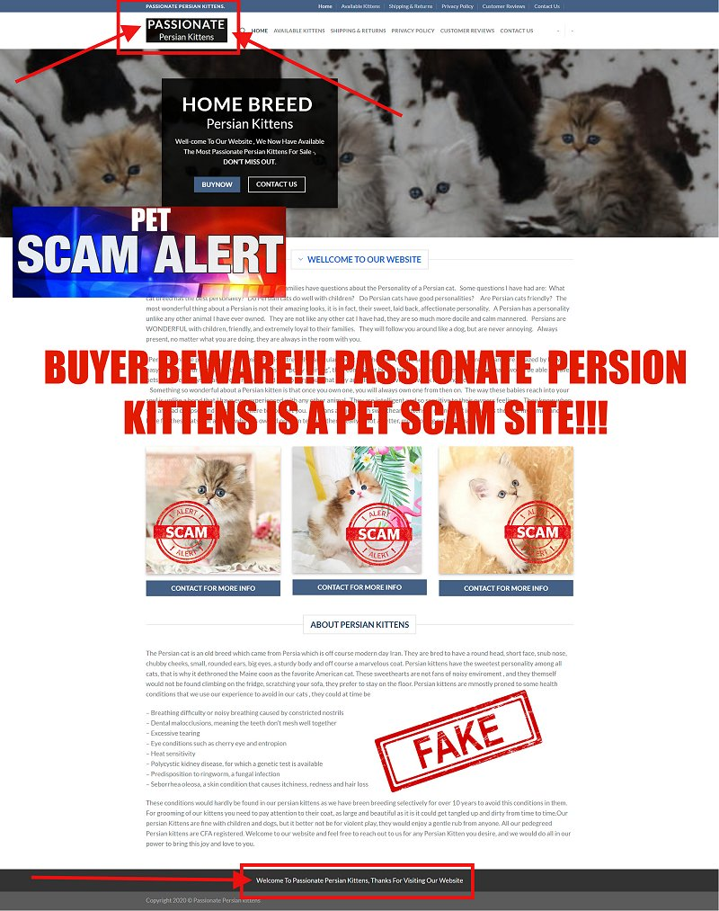 Passionate Persian Kittens is A Pet Scam Site