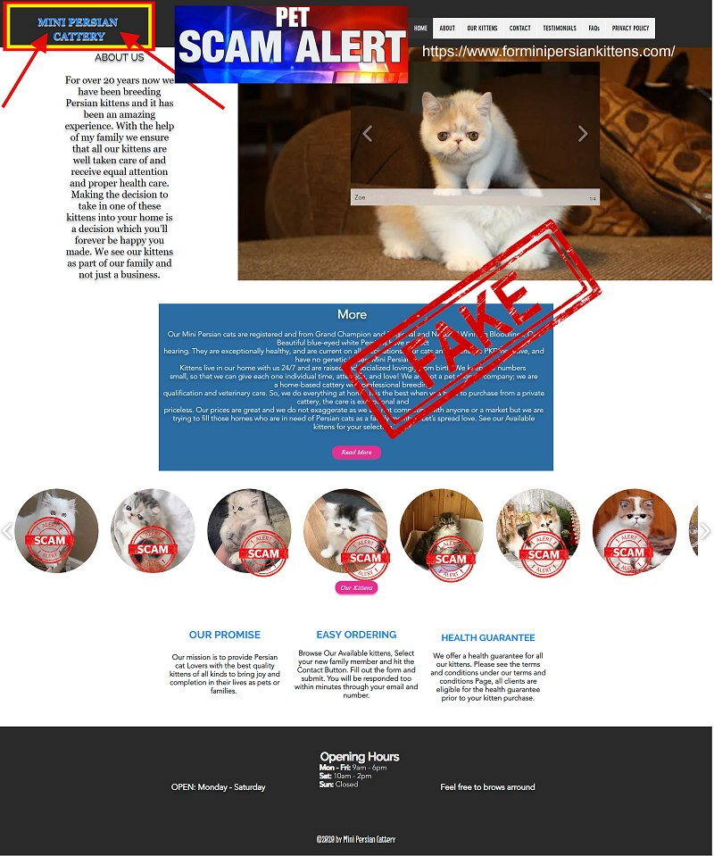 Mini Persians Cattery is a Fake Website