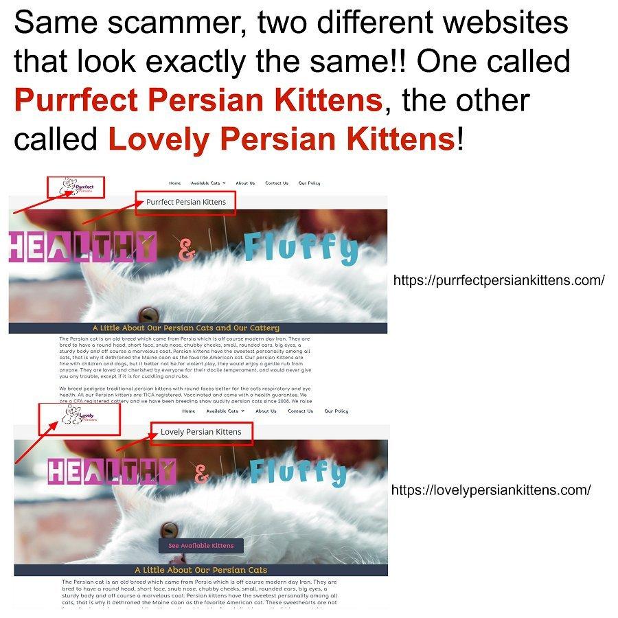 Purrfect Persian Kittens
