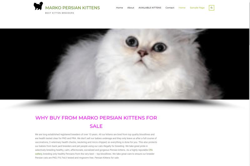 Marko Persian Kittens - SCAM!